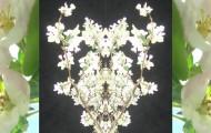 NutidenCollageÄppelblom